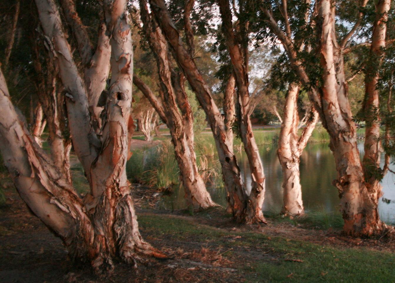 trees-at-herdsman-lake_425047090_o