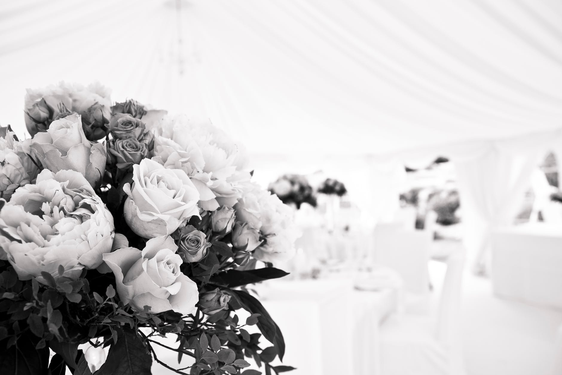 beautiful flowers black and white blur bouquet